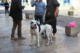 Замечательный пес был мною сфотографирован, потом подошли ребята, попросили показать фотку, оценили, им понравилось, сказалисупер!