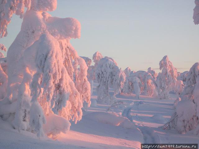 Божественная красота зимней Лаппландии