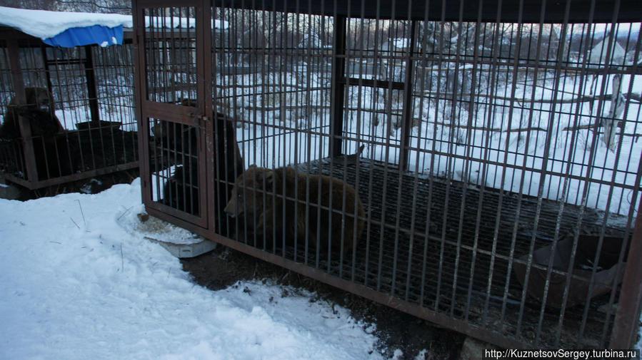 Медведи в этнокультурном комплексе