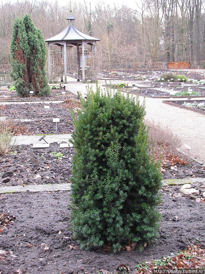 Ботанический  сад. Фредриксдаль, январь.