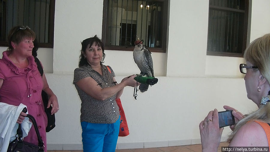 Даже сфотографироваться предоставят птичку