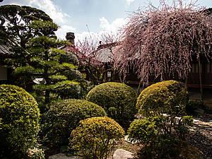 Сад во внутреннем дворике. Очень симпатичный.