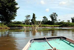 Первые километры по мангровым болотам