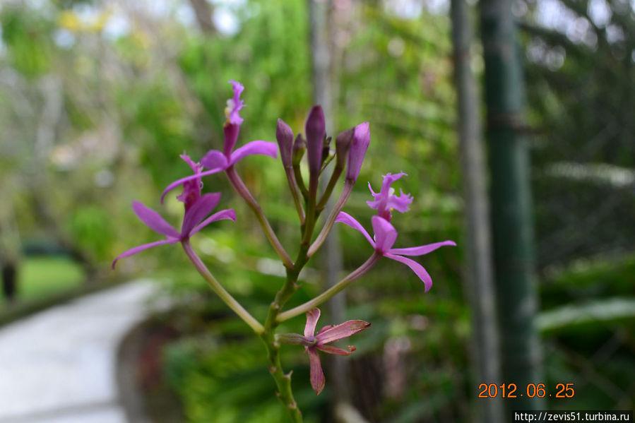 Посещение сада орхидей в окрестностях г.Денпасар Денпасар, Индонезия