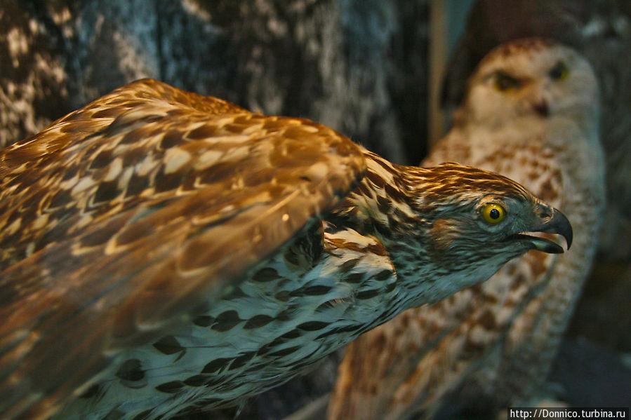хищных птиц тоже хватает, они охотятся в основном на леммингов