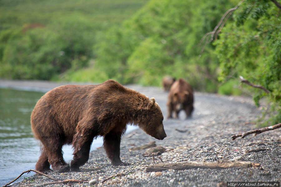 Камчатка. Земля медведей Кроноцкий Биосферный Заповедник, Россия