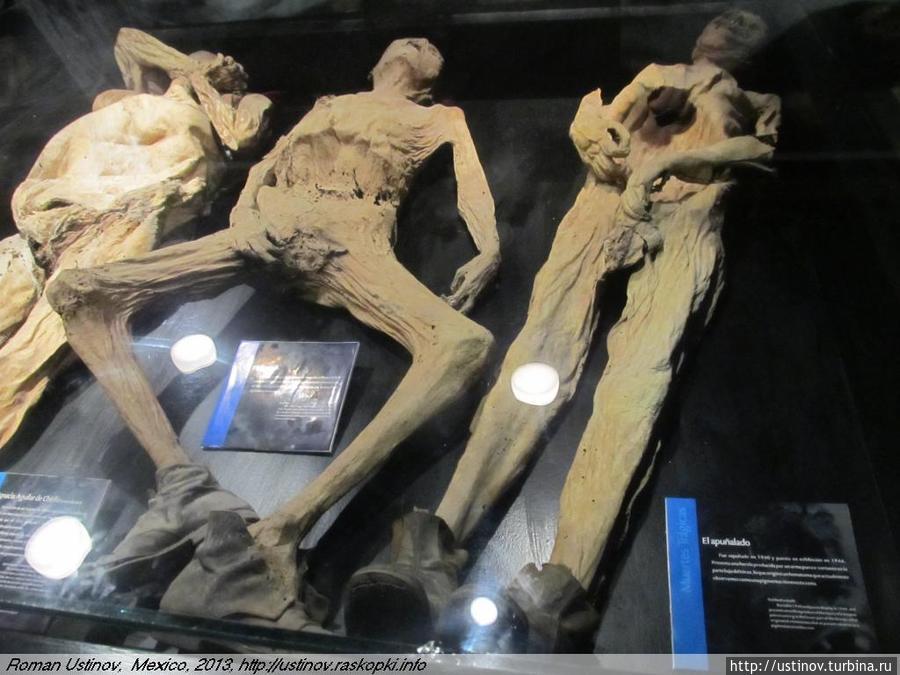 Фото мумии котовского