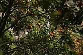 Из зимы в лето (апельсины в феврале в Татопани)