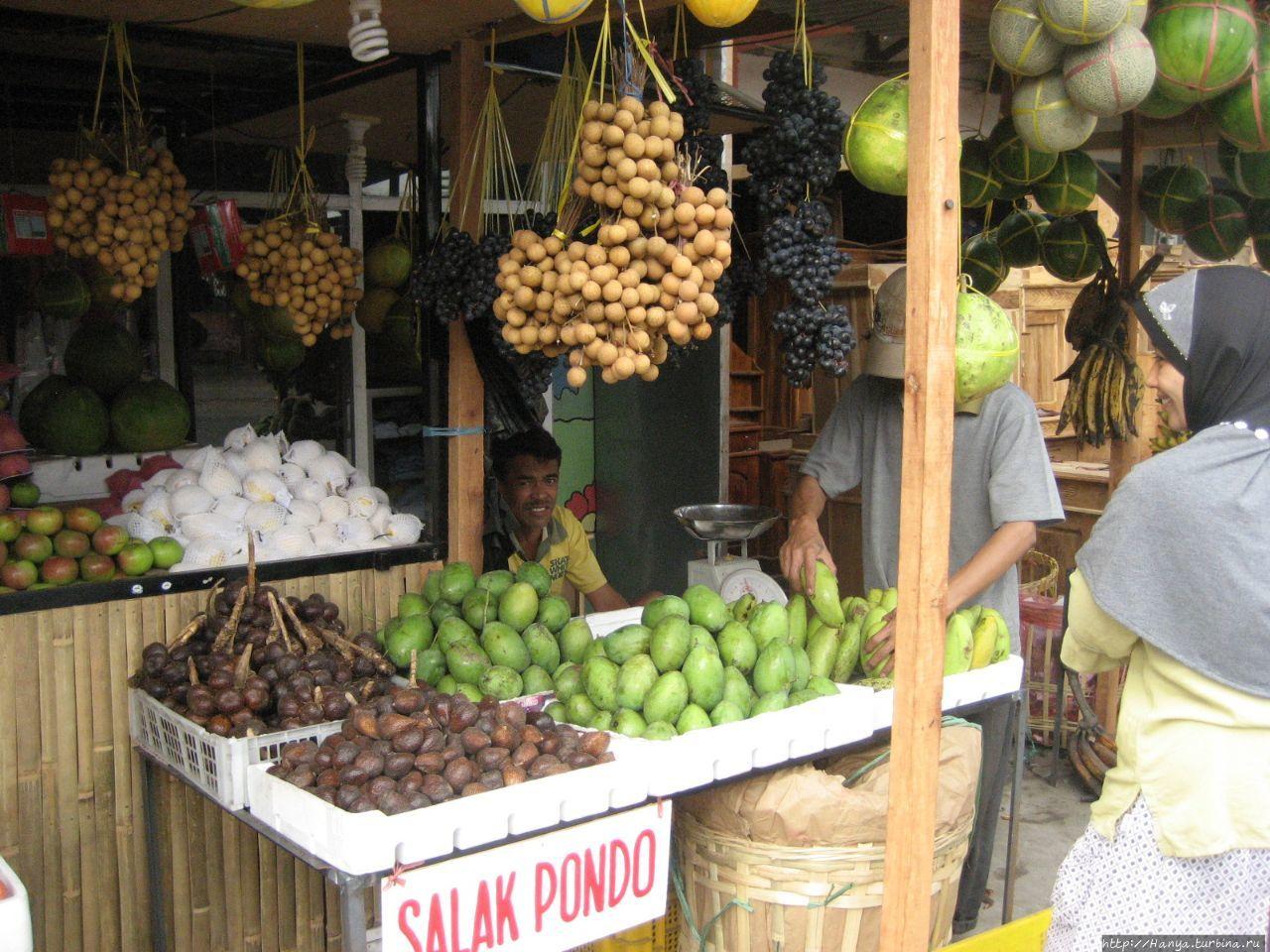Плантация какао-бобов и как растет кофе Баньюванги, Индонезия