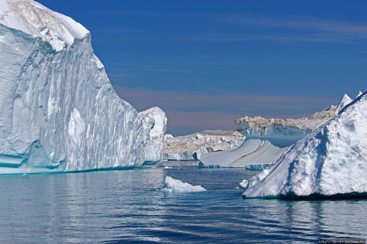 северно ледовитый океан с картинками небольшие хищники обитают
