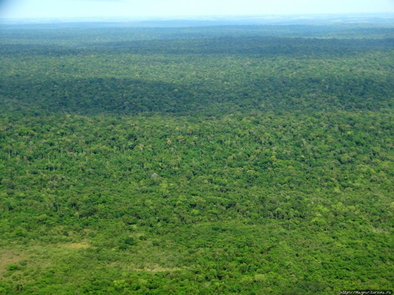 Бескрайние джунгли.