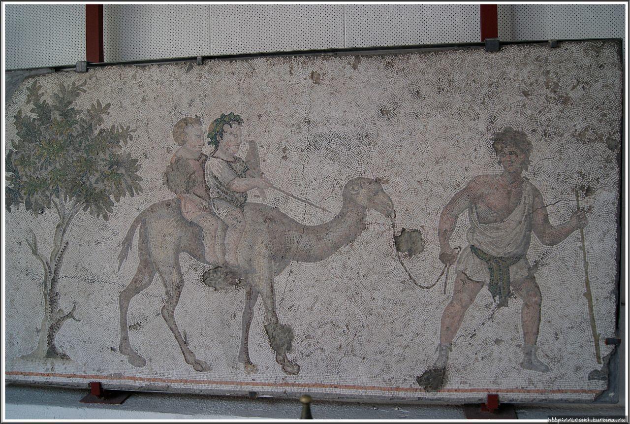 Мальчики, едущие на вербл