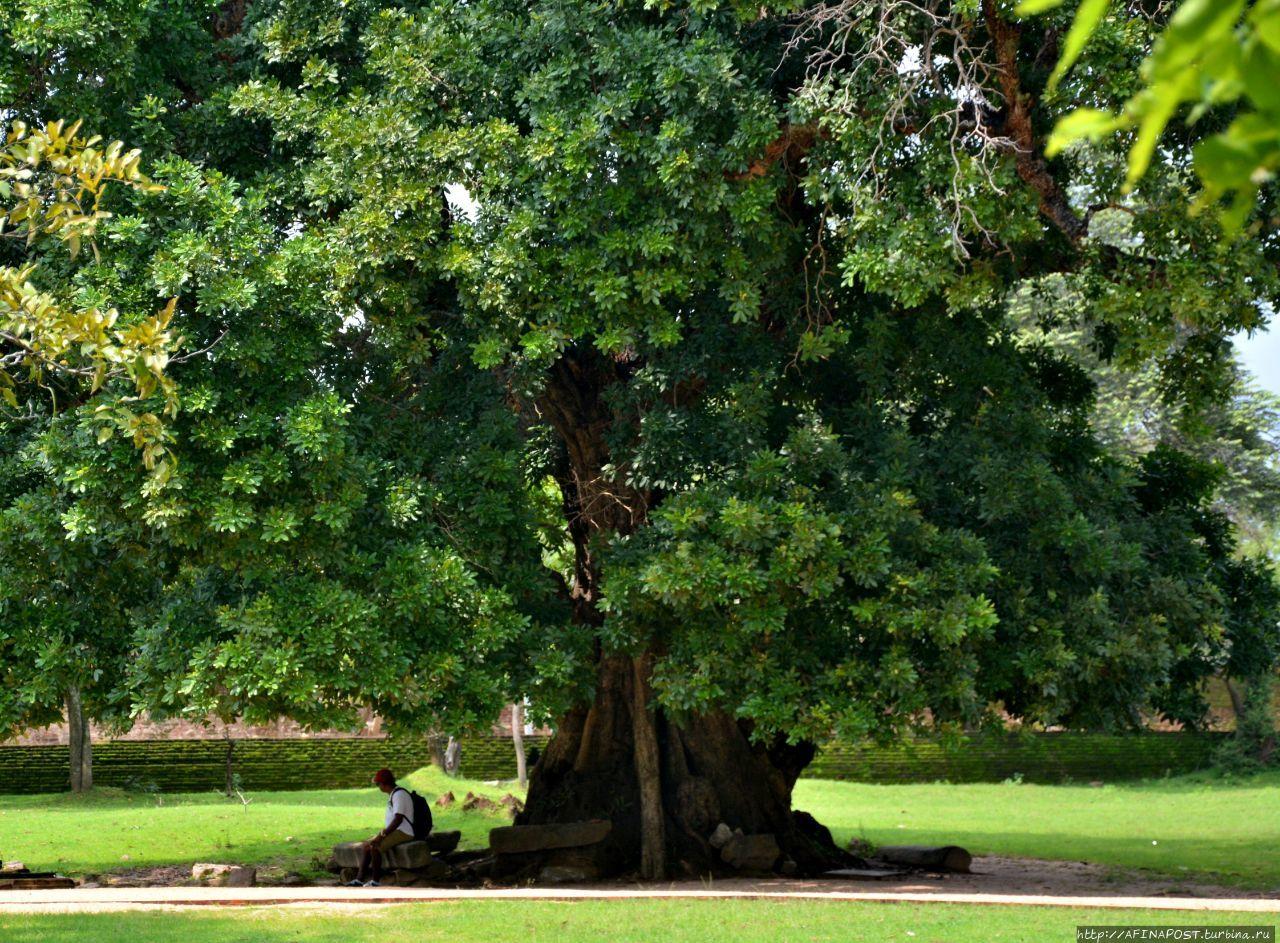 Античный город Полоннарува Полоннарува, Шри-Ланка
