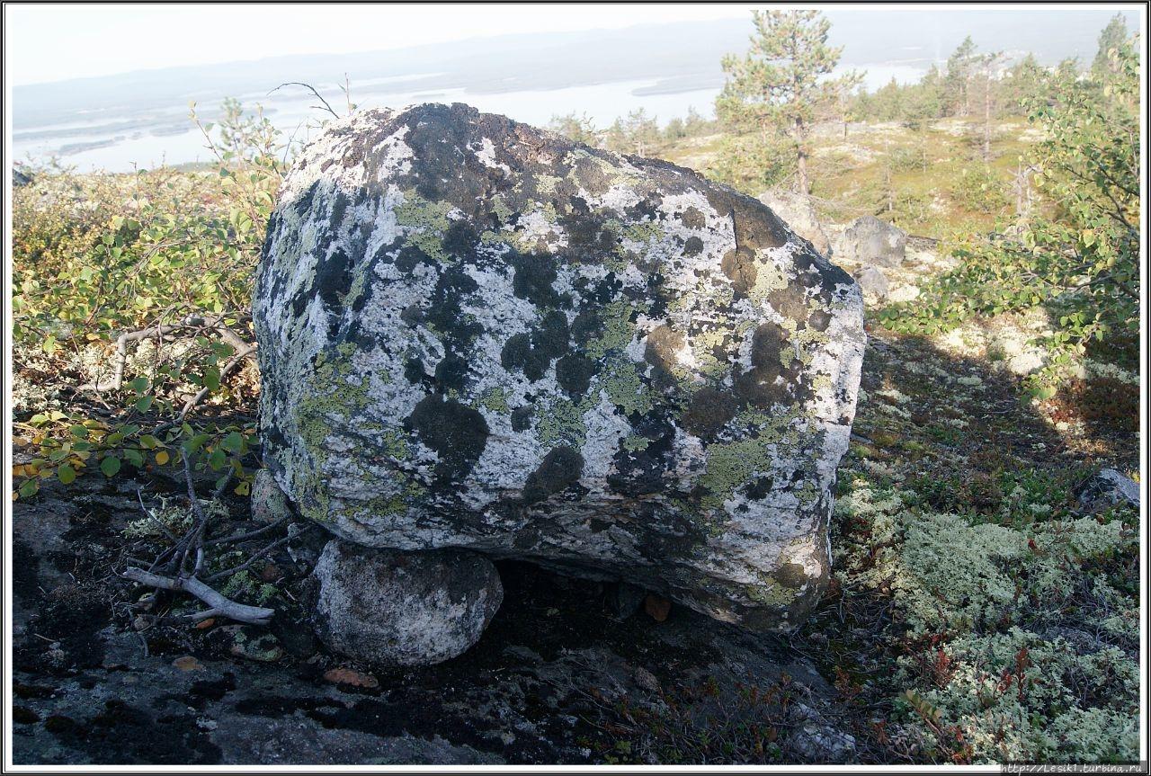 Камни покрыты лишайником