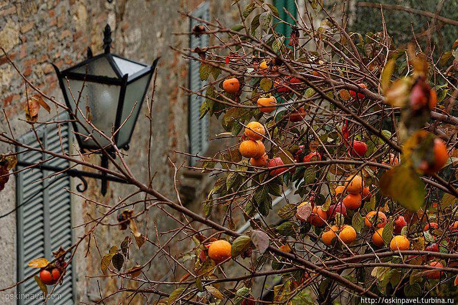 Картинки поздняя осень на даче качестве напутствия