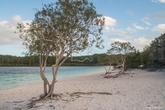 Озеро Маккензи. Повышенная кислотность воды и ее исключительная чистота делают невозможным существование в ней любых организмов, обычно живущих в пресной воде.