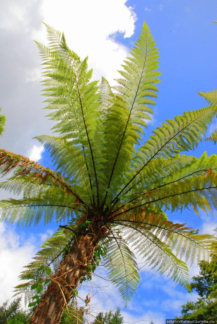 простым вариантом фотографии папоротников пальм это