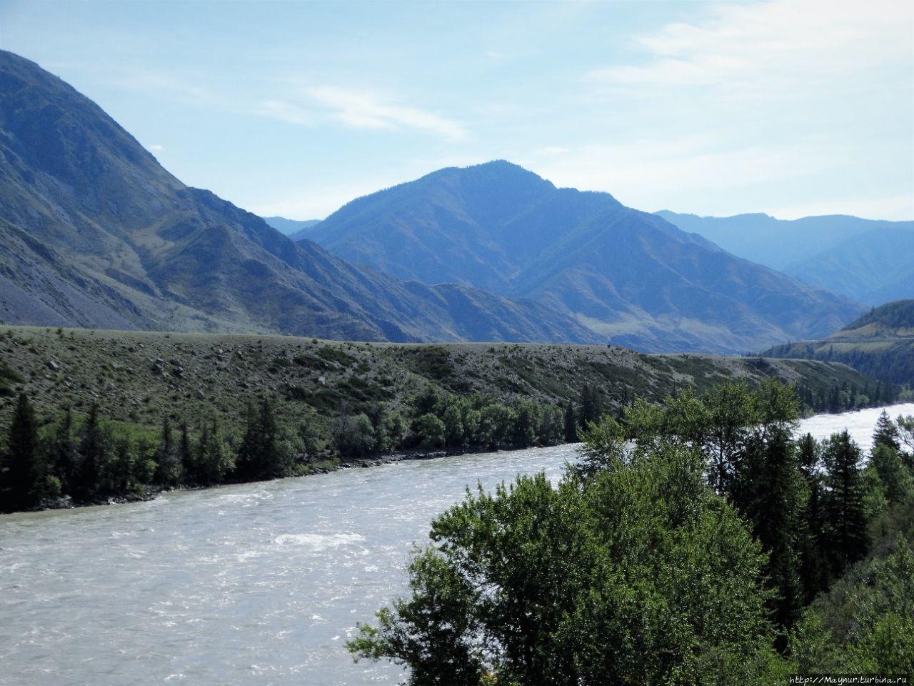 Река  Чуя.