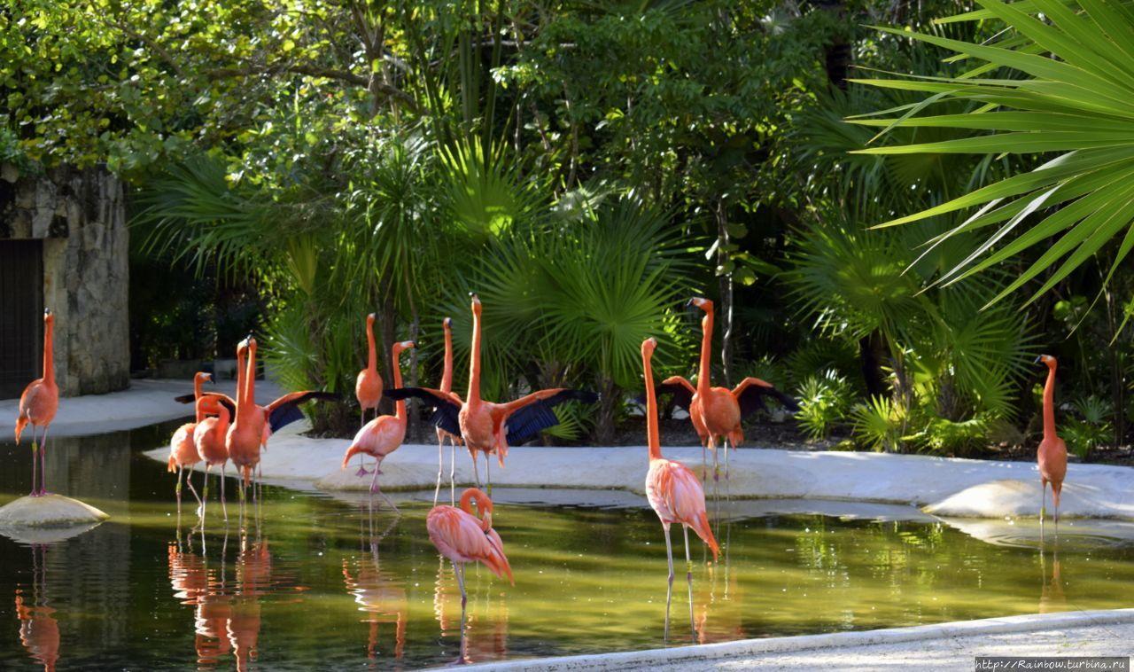 Мексиканский  рай Штат Кинтана-Роо, Мексика
