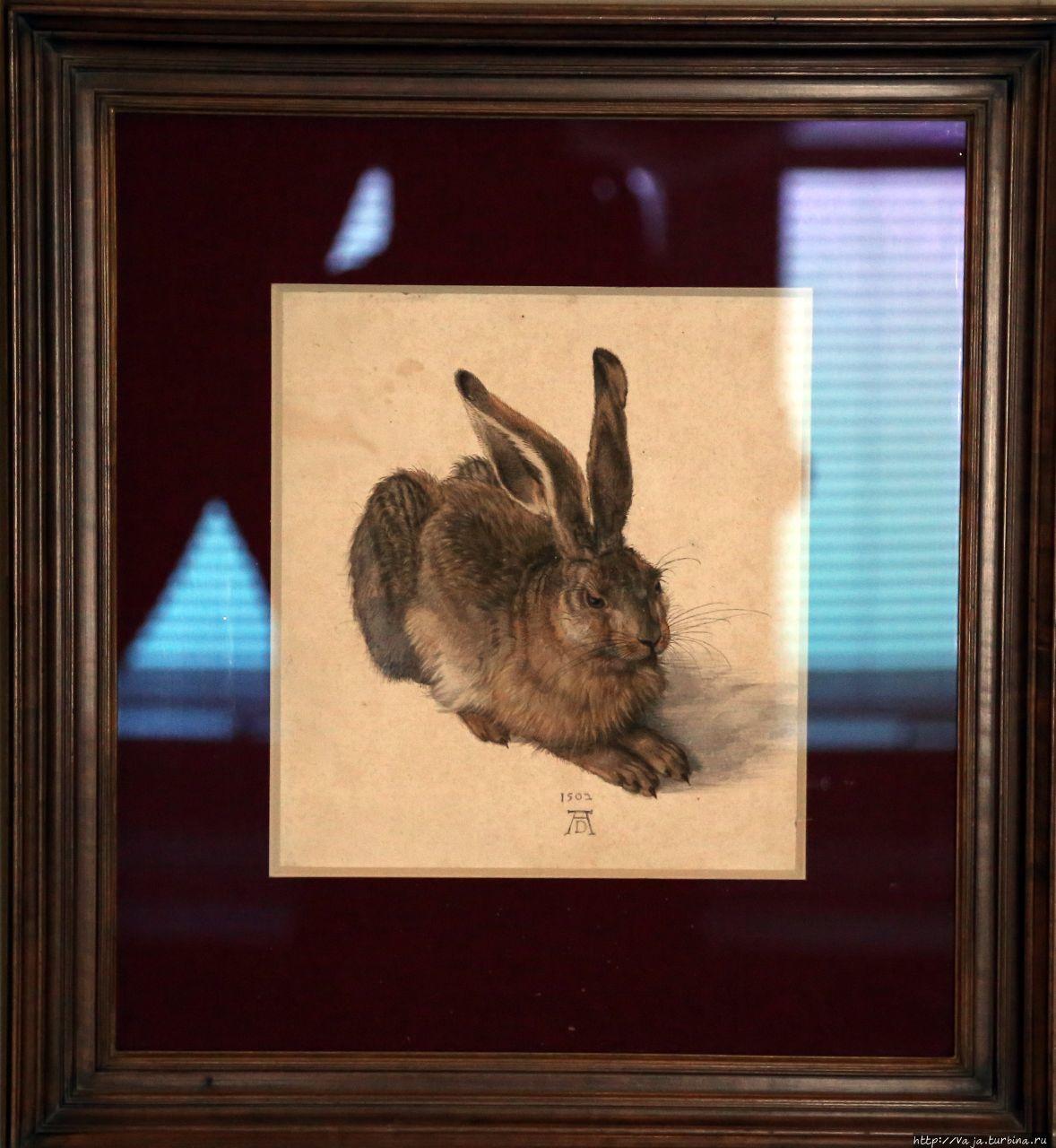 Заяц австрия картина