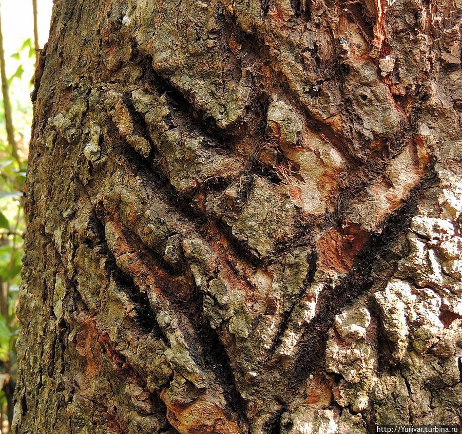 зеленые царапины на дереве от когтей медведя фото монтажу