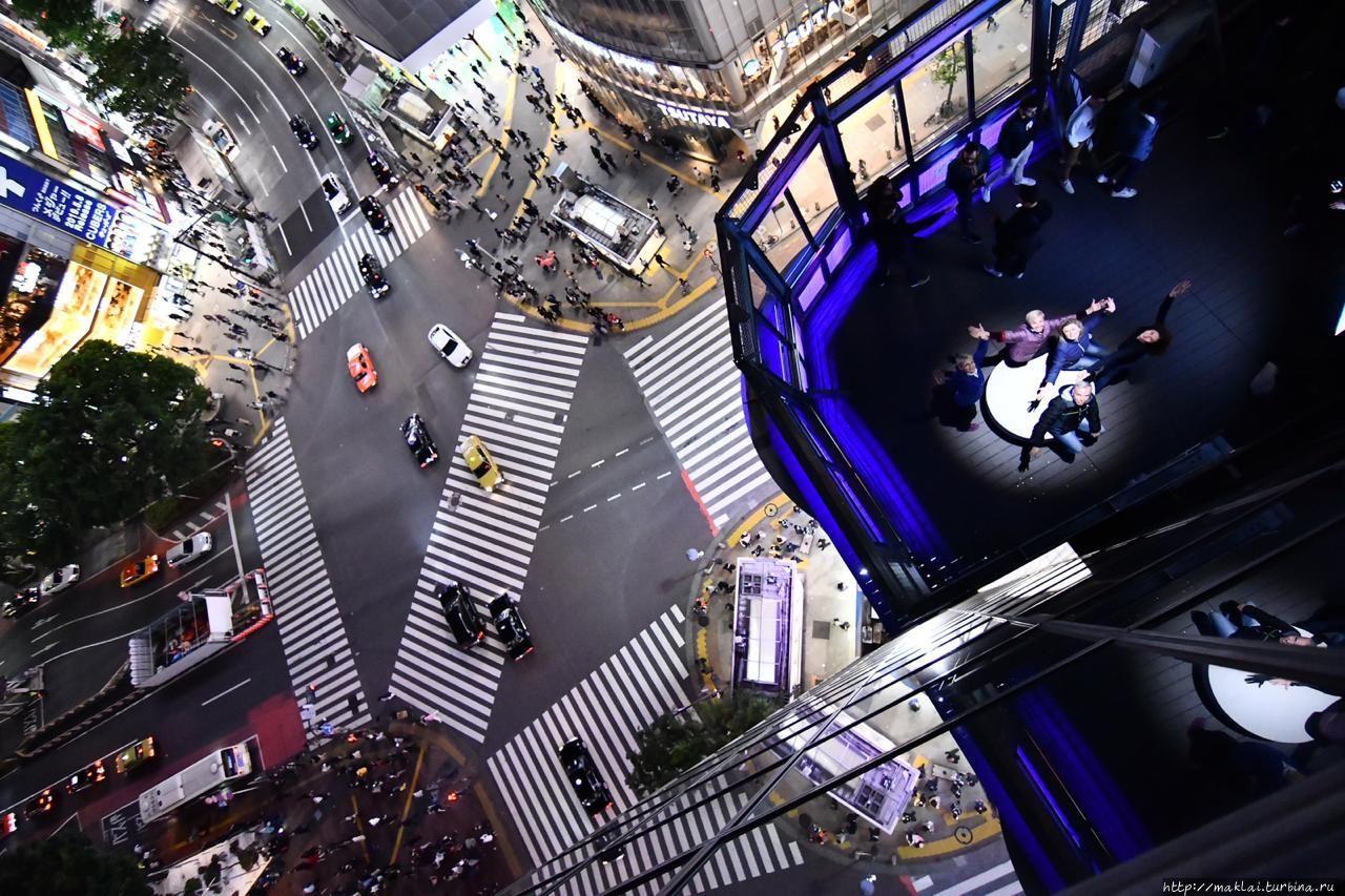 На светлом пятачке — я. Привет! Токио, Япония